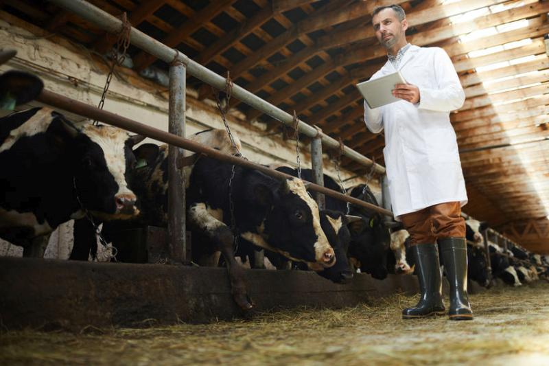 Around 95% of the vets carrying out critical public health work and animal welfare monitoring in abattoirs hail from overseas