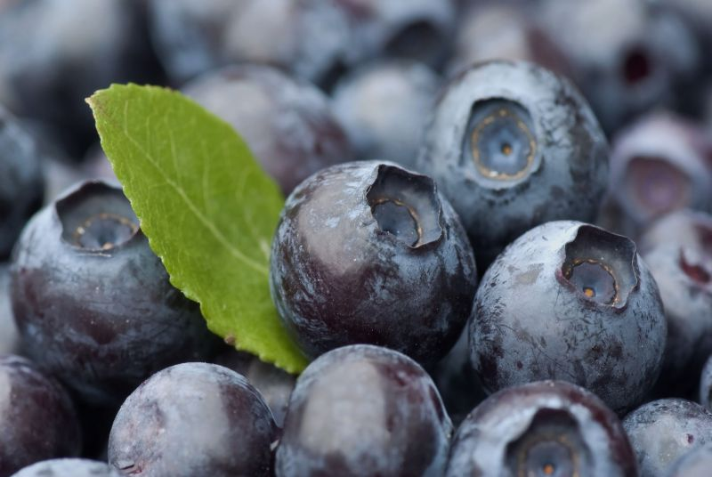 British blueberry production has significantly increased over the years