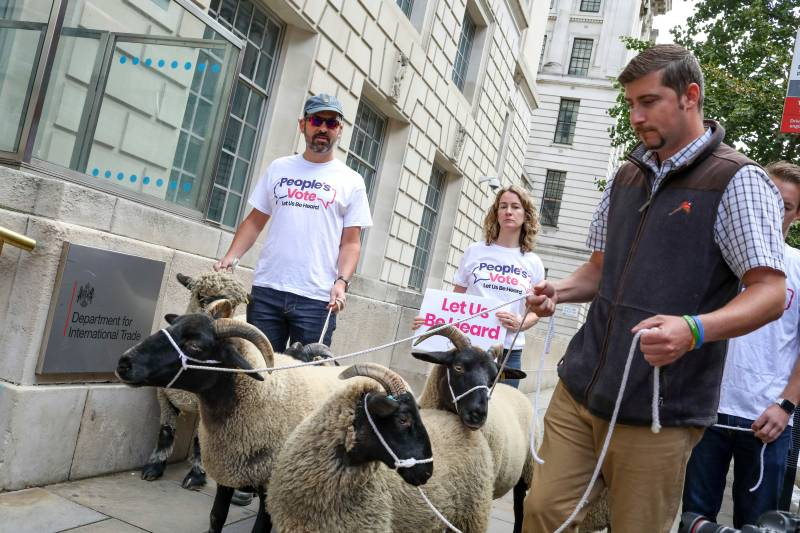 Demonstrators walk a flock of sheep outside British Government's Department of International Trade as part of a protest against Brexit (Photo: Vudi Xhymshiti/AP/Shutterstock)