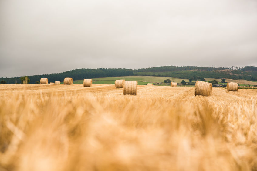 Crop reports from round the Scotland show all farmers are in the same boat