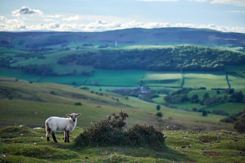 A new call has been made for the introduction of a three-point plan to protect farming in National Parks