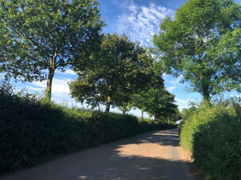 Farmers are encouraged to health-check a hedge as part of the Great British Hedgerow Survey