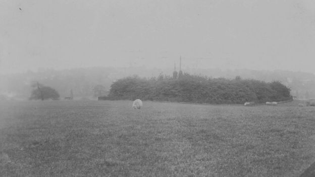 Sixty years ago, it was a common sight to see sheep grazing the North London park (Photo: City of London Corporation)