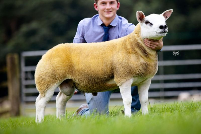 Breeder Allan Wight said the lamb had been a standout from two weeks old, with exceptional flesh and character