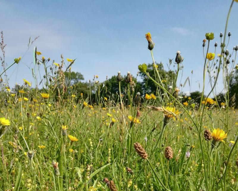Groups in the Midlands have been awarded £100,000 funding to improve biodiversity
