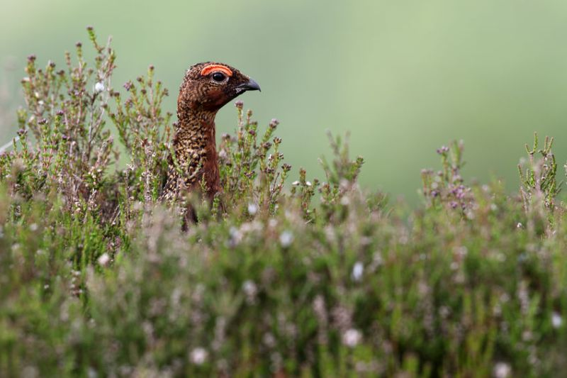 The British Game Alliance has secured a trade agreement for 250,000 game birds in Hong Kong and Macau