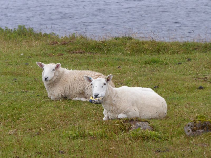 Discarded rubbish in the countryside can have serious effects on livestock (Photo: Noel Hawkins)