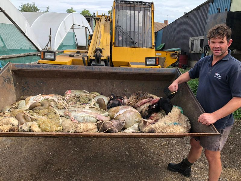 Patrick Green pictured with the remains of some of the slaughtered sheep (Photo: Northamptonshire Police)