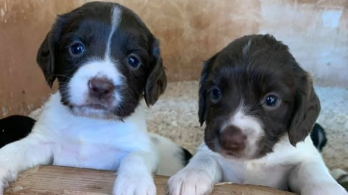 Seven puppies were stolen on Monday from a Dawlish farm (Photo: Aimee Foster/Facebook)