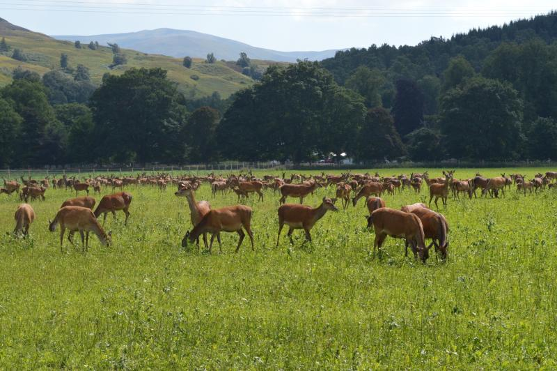 The venison market in the UK alone is estimated to be worth around £100 million per year