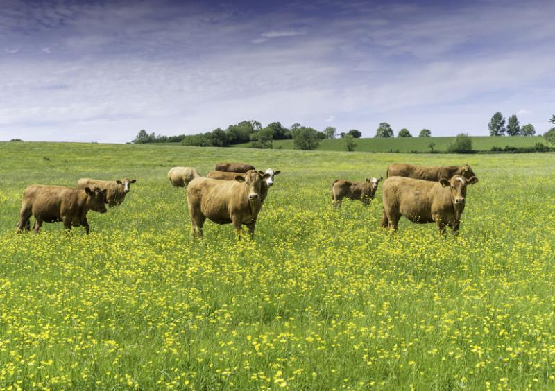 Recent media reports have amounted to a 'mass misunderstanding' of the effects of UK beef production on the environment
