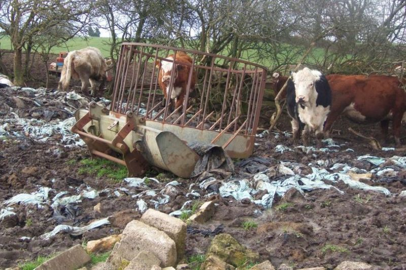 Officers found dozens of cattle deep in mud in fields full of scrap (Photo: Bath and North East Somerset Council)