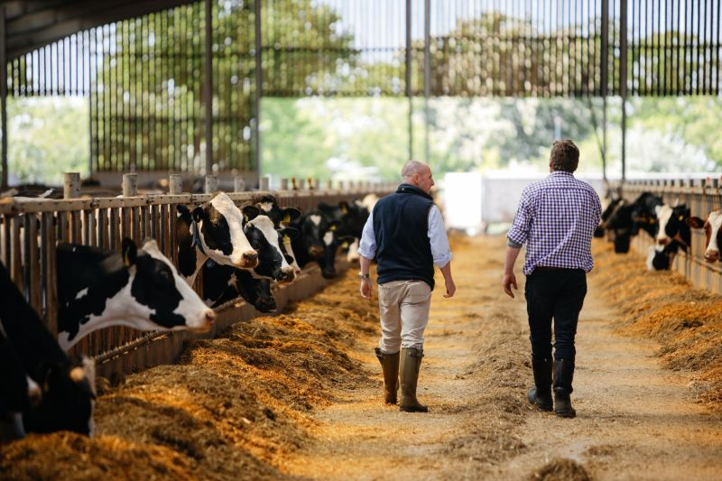 The advice service helps dairy farmers reduce feed waste and optimise input utilisation
