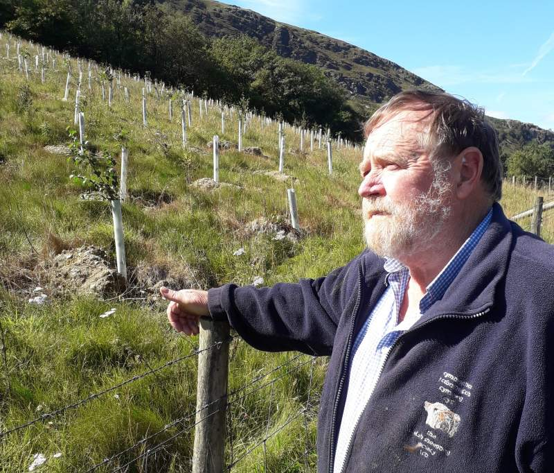 Derek Morgan planted the trees as part of a long-term investment and to help the environment