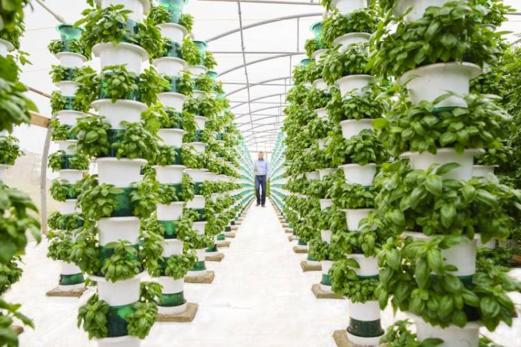 The vertical farms could potentially reduce imports from the EU