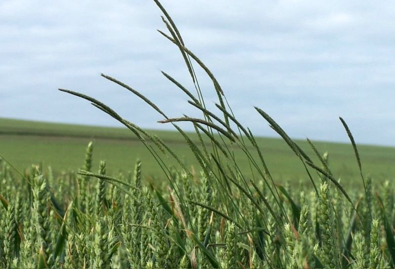 Weed resistance, coupled with the lack of new products, have left farmers facing huge challenges in weed control