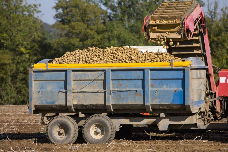 The Germany chemical giant has stopped sales of its key potato seed treatment product