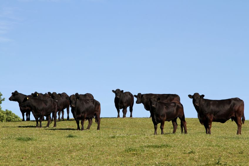 Scottish cattle numbers have fallen to the lowest level in sixty years
