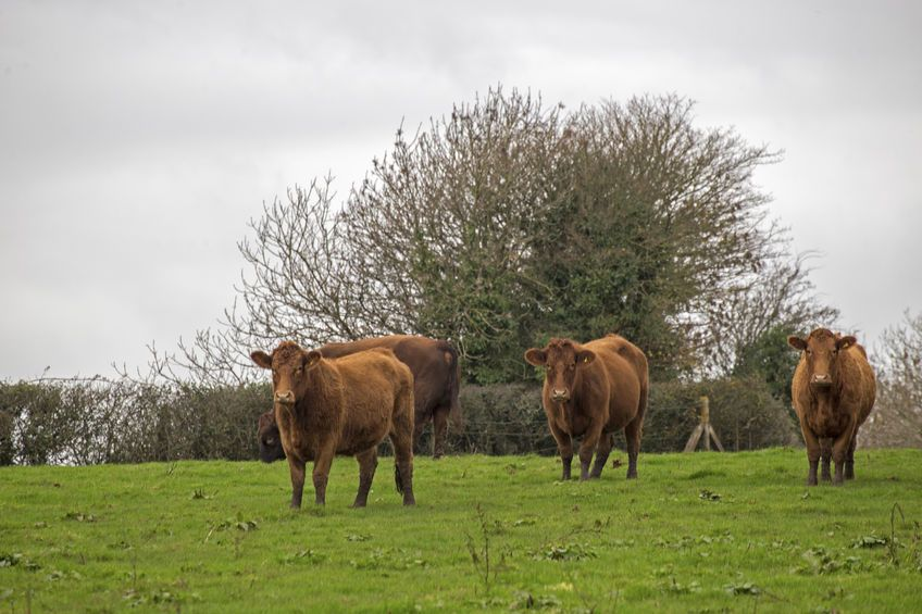 Numerous farm groups gave evidence to the EFRA Committee which looked at the causes of the current low beef prices