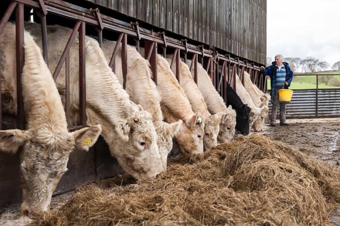 Single welsh farmers