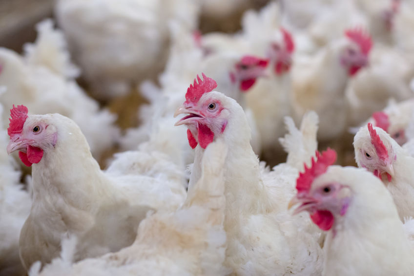 The antibiotics were suspected to have been heading for a County Tyrone poultry farm