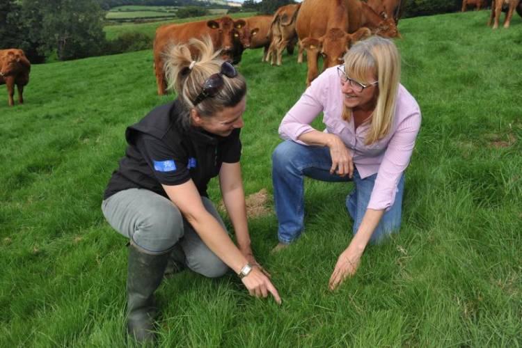 Farmers were advised during a Farming Connect Focus Farm event at Newton Farm, near Brecon