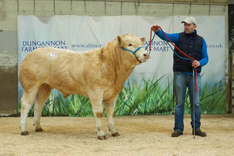 Top price of £3000 was secured by Colin Todd for his sole entry Pinehill Orion, sired by Pinehill Goldenballs