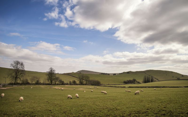 Brexit will result in significant change that will affect sheep farming, most notably in trade patterns and markets
