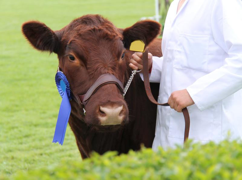 A show chairman says more young farmers and volunteers are needed to keep small farming shows going