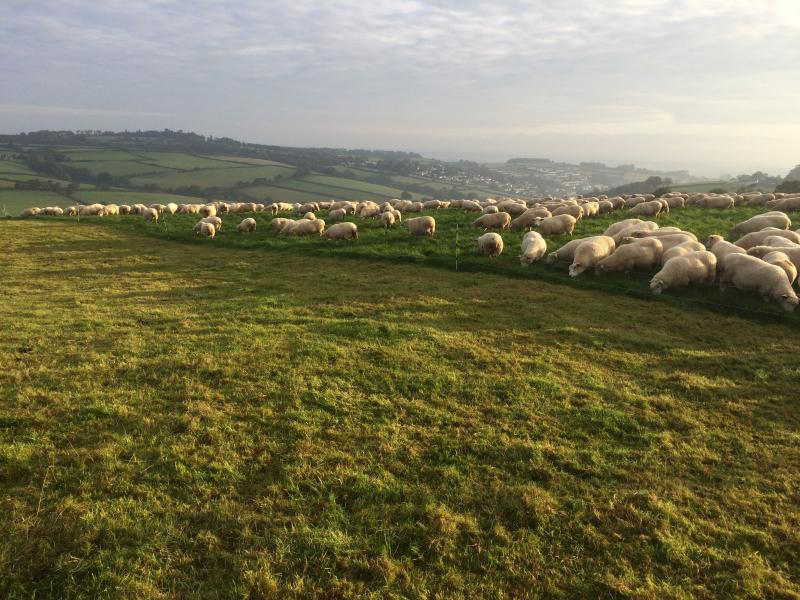 'Prosper from pasture' – application window for the new grassland programme is now open until 9 December
