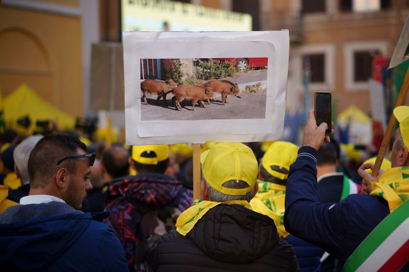 Demonstrators hold a photo showing wild boars walking in a street as they take part in a protest against the overpopulation of wild boars (Photo: Andrew Medichini/AP/Shutterstock)