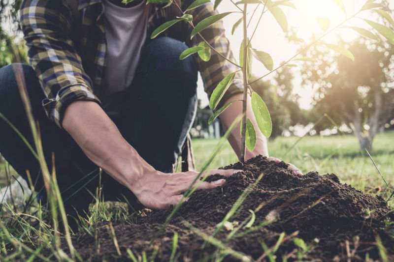 Young Farmers' Clubs are planting more than 9,000 trees over the next two months in their bid to support the environment and combat the damaging effects of climate change