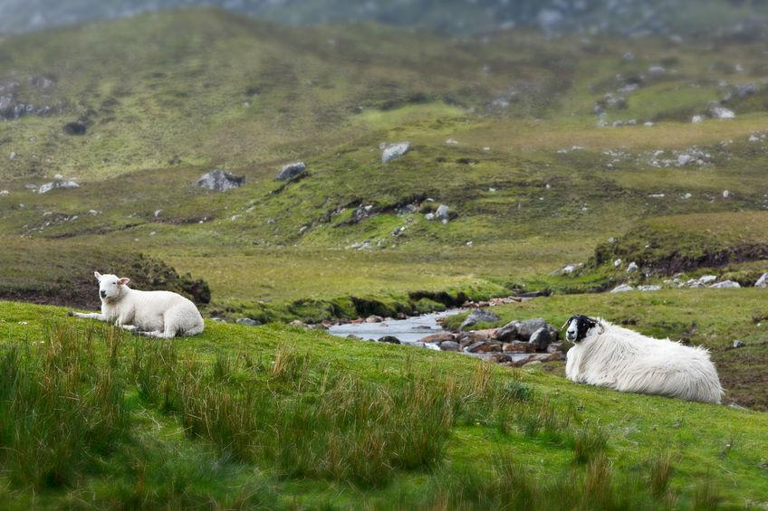 The Scottish government said CAP support is vital for Scotland's remote hill farmers