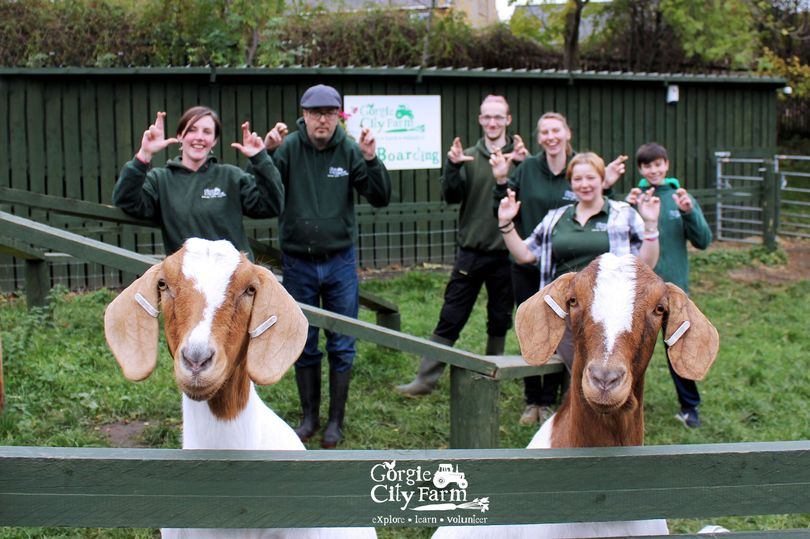The popular urban farm, which keeps a range of livestock, has received a significant financial boost (Photo: Gorgie City Farm/Facebook)
