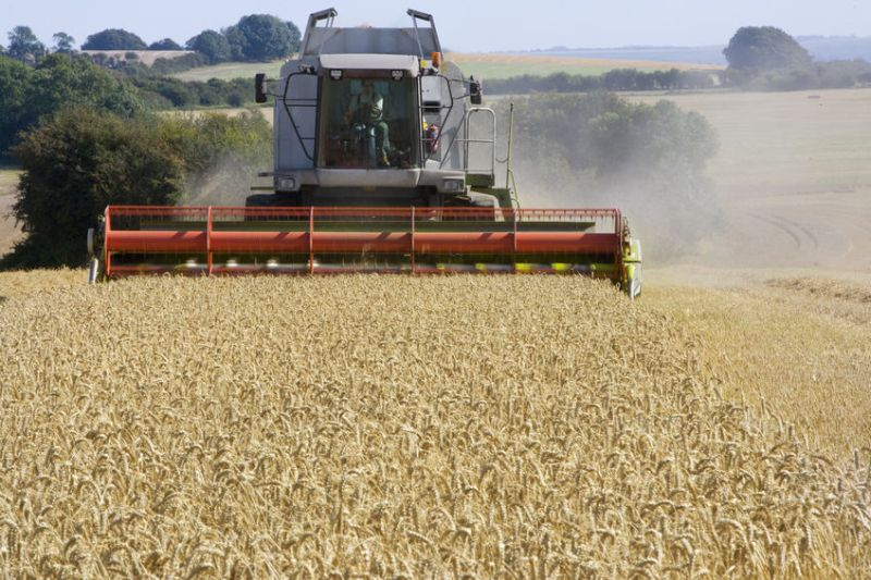 The wetter weather from the start of June helped to secure yields of most crops
