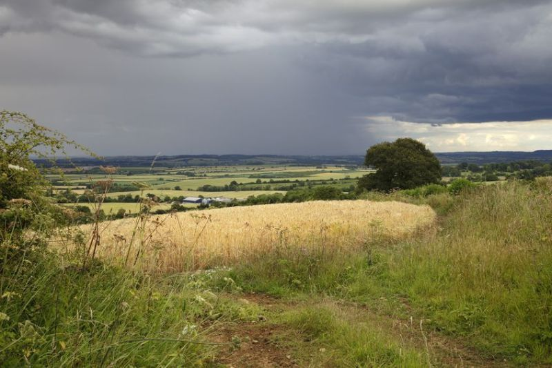 The wet weather means growers may cut down on the amount of winter and spring crops they plant
