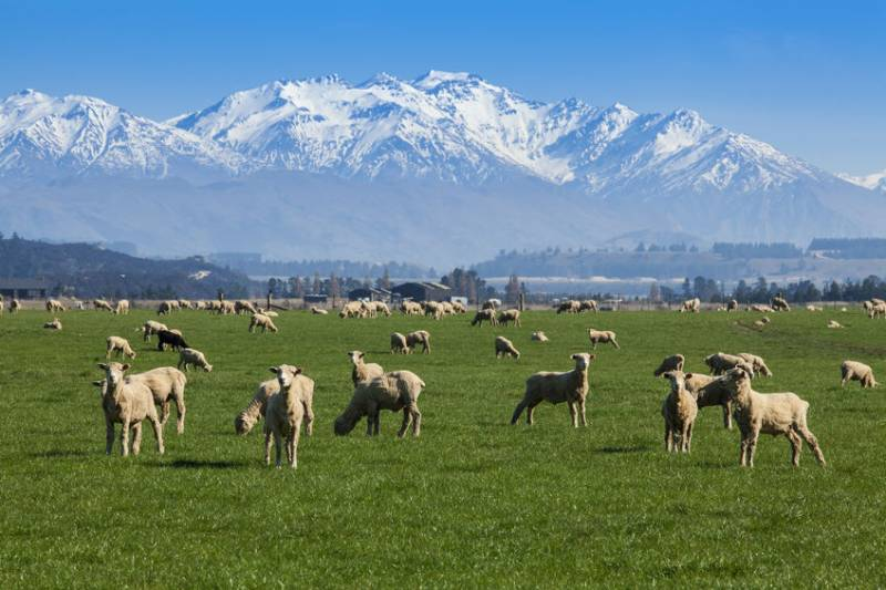In a world first, sheep farmers in New Zealand are now have the ability to breed animals that emit less methane