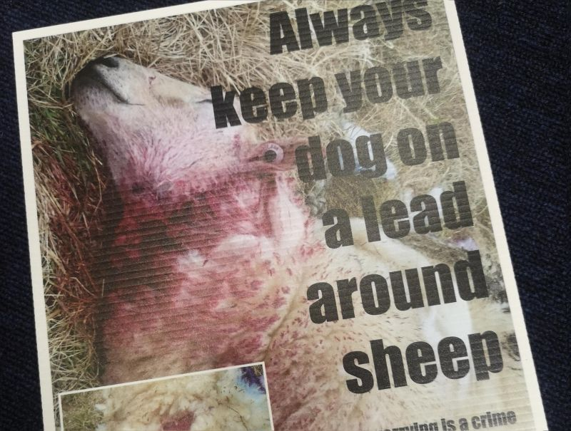 The police have used an image of a recent incident to educate the public on responsible dog ownership (Photo: Gloucestershire Constabulary/Twitter)