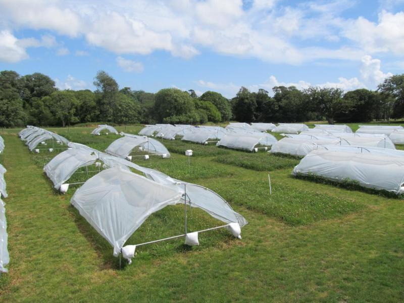 Half of the plots were covered in rain shelters to create a severe drought event for nine weeks (Photo: John Finn/British Ecological Society)