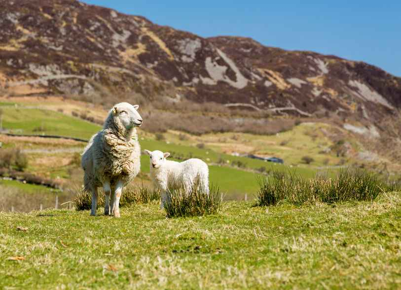 The research wants to make consumers aware of the low environmental impact of sheep and beef production in Wales