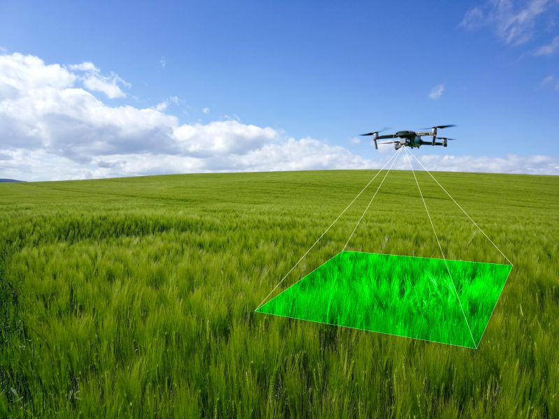 Skippy Scout uses high resolution images taken using a drone to analyse crops and show evidence of weeds or pests
