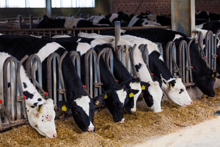 Securing frictionless trade with the EU and safeguarding food standards will be crucial for the UK dairy sector, according to the NFU