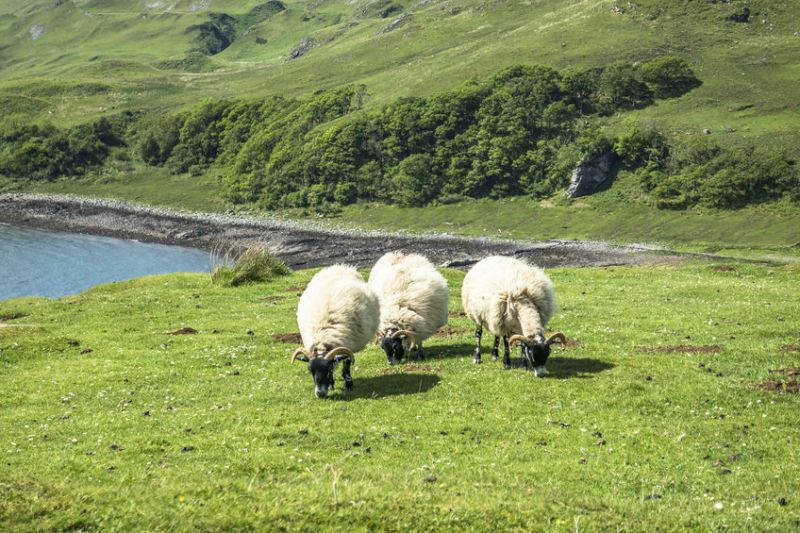 Scotland's remote hill farmers will receive loans of up to 95% of their 2019 payment