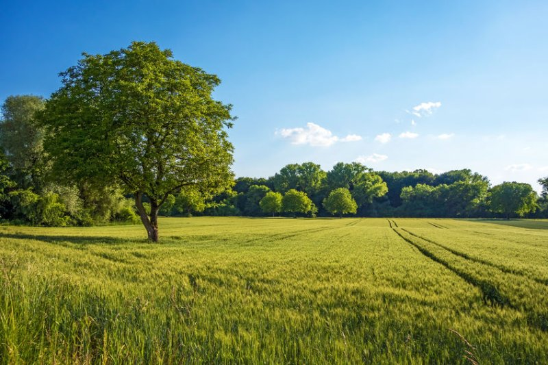 Farmers who work on National Trust-owned farms have raised concerns regarding the recent tree planting pledge (Photo: LPA/REX/Shutterstock)