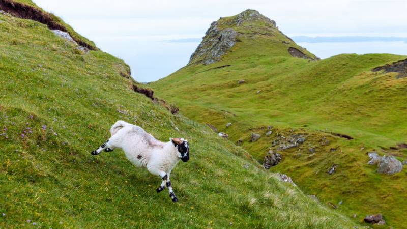 Sheep and goats may be the only source of livelihood for farmers in less favourable environments