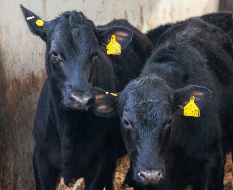 Aldi is to trial its new procurement model for the Scottish beef industry