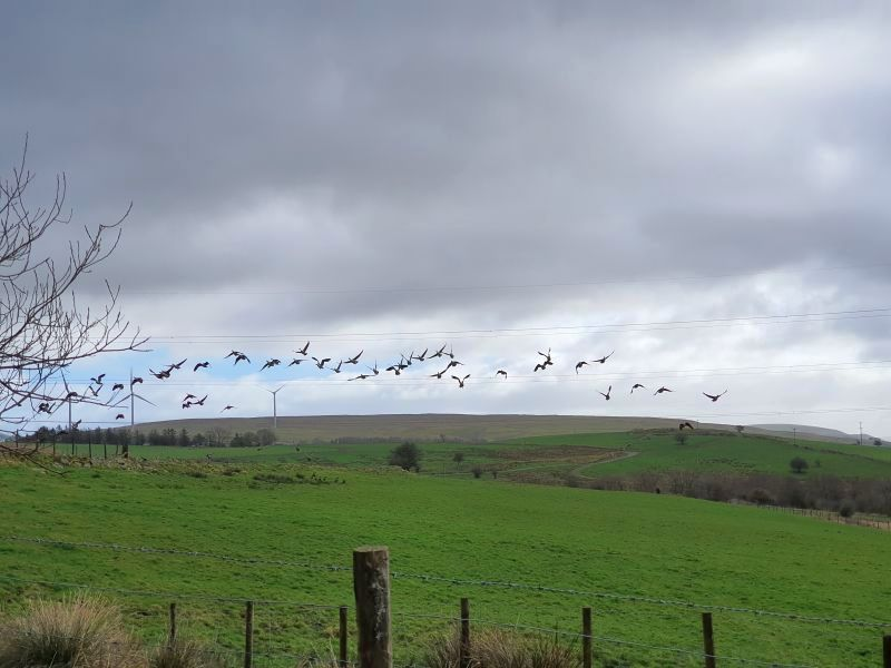 Farmers are being urged to get involved in the Big Farmland Bird Count from this Friday to 16 February