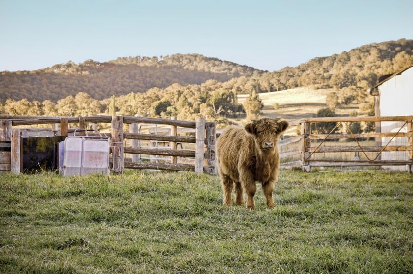Recommendations will be produced to improve the efficiency, productivity and profitability of Scottish beef