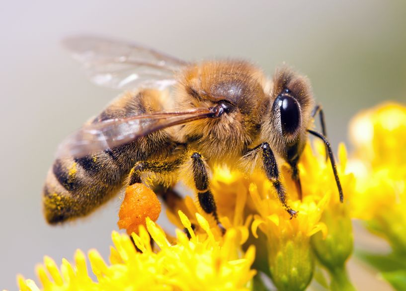 Researchers identified substantial opportunities to improve the quality of agri-environmental habitats by implementing pollinator-friendly management practices