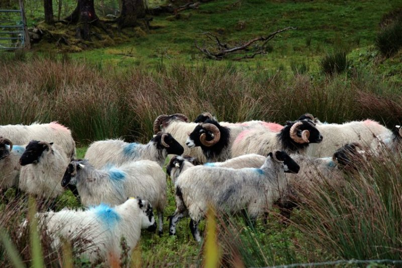 The National Sheep Association said any move to abandon the UK farming industry is 'almost too ridiculous to believe'